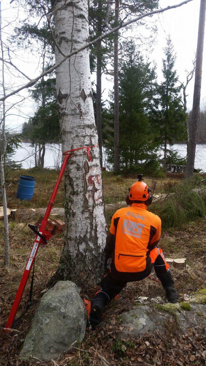 RUT-avdrag även för trädfällning