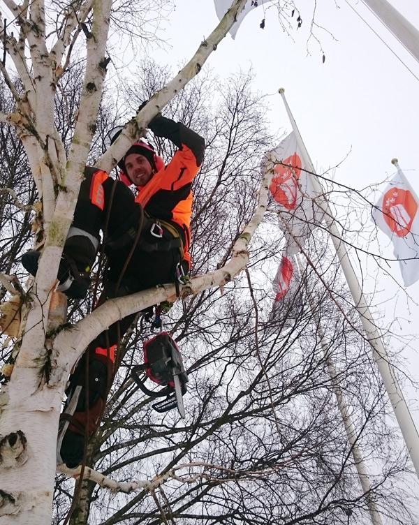 Trädfällning för Stockholms Mässan